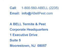 A Bell Termite and Pest Control